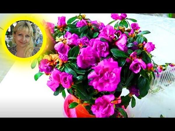 Как адаптировать магазинные цветы к домашним условиям. Почему купленные цветы погибают