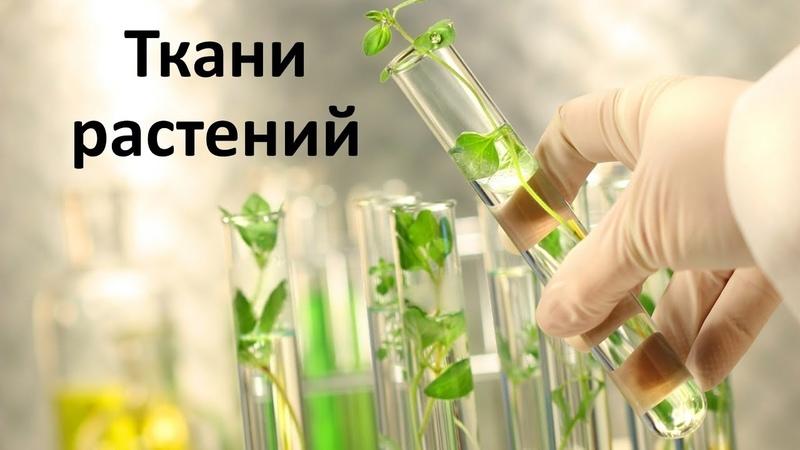 2 Органы и ткани растений 6 класс биология подготовка к ЕГЭ и ОГЭ 2019