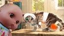 Куклы Пупсики играют в игру-мультик про Котенка Костюмированная вечеринка на канале Зырики ТВ