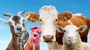 Домашние животные для детей КАК ГОВОРЯТ ЖИВОТНЫЕ 2 ЗВУКИ ЖИВОТНЫХ Корова Лошадь Курица Петух