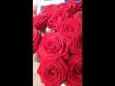 Роза сорт Гран При