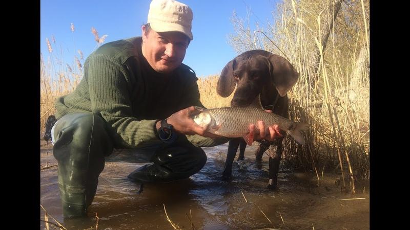 4 Голавль Весной. Рыбалка с Берега на Реке Волге. Ловля на Закидушку Донку