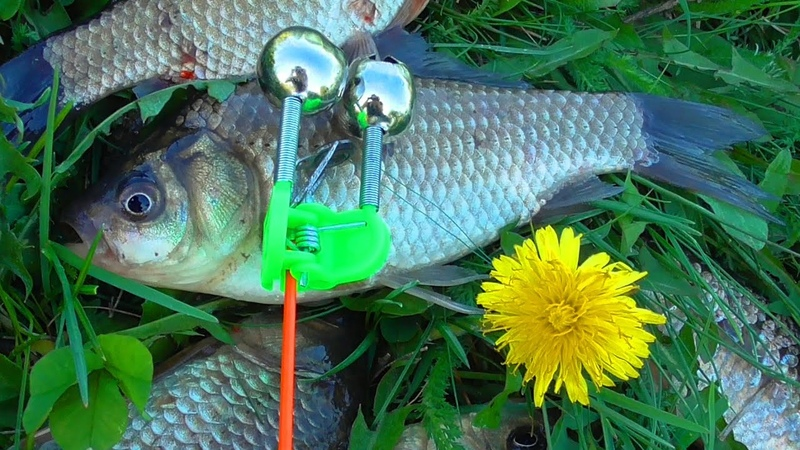 БЕШЕНЫЙ КЛЁВ КАРАСЯ НА ЗАКИДУШКИ. Рыбалка на красивом пруду