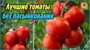 Самые лучшие сорта томатов без пасынкования для теплиц и открытого грунта. Описания и характеристики