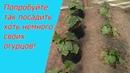 Три способа выращивания огурцов об этом вам нигде больше не расскажут!