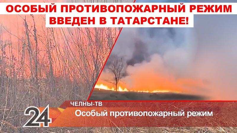 Особый противопожарный режим в РТ Крупное возгорание сухостоя возле остановки Дворец Спорта