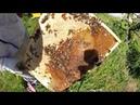 Знакомство с маткой - сотовый мёд в банках