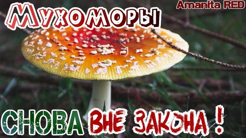 Новые правила сбора грибов Ядовитые грибы вне закона