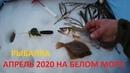 Рыбалка в апреле на Белом море Корюх, Камбала сухое море, железные ворота