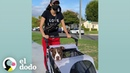Mujer lleva a su perro en un cochecito a todos lados I El Dodo