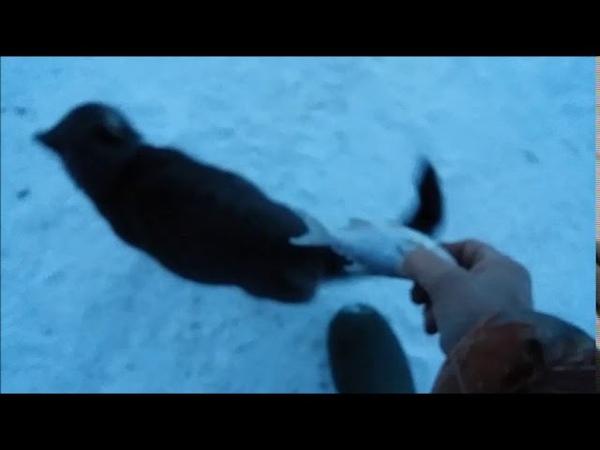 Кот Мурзик 😺встречает меня с рыбалки 🐟 Кот рыбак