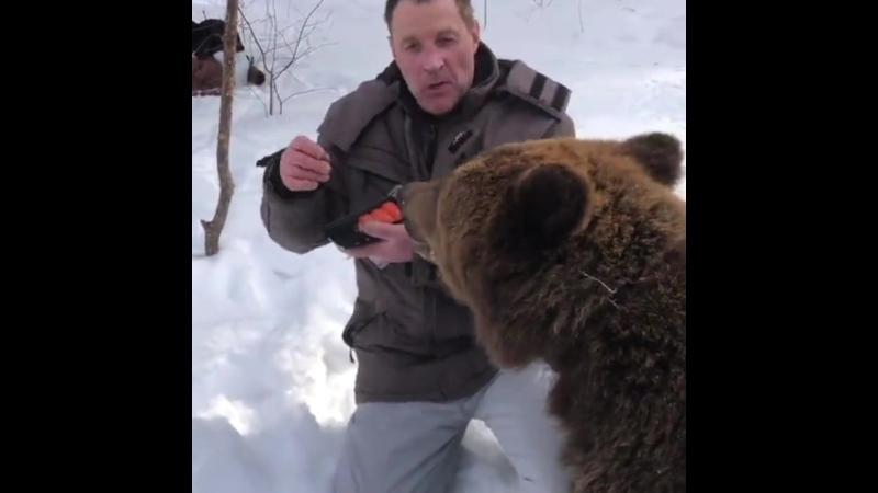 Медведь а где соевый соус