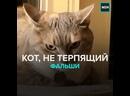 Кот недоволен пением хозяина — Москва 24