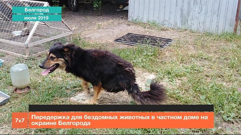 Передержка для бездомных животных в частном доме на окраине Белгорода