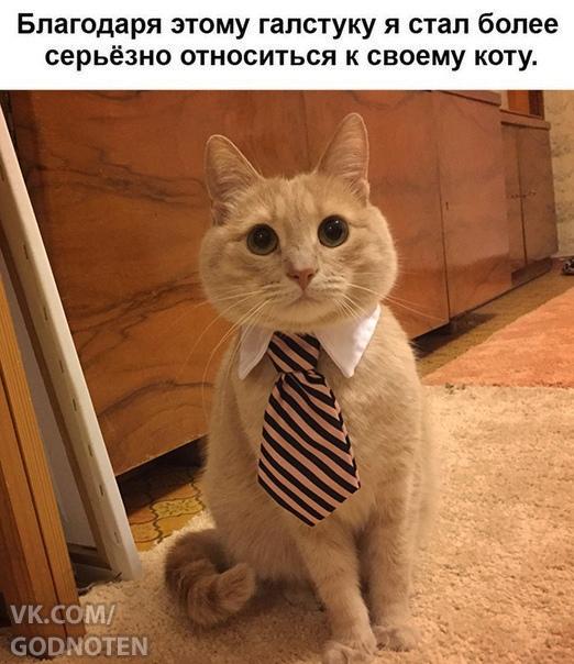 Мистер Кот -