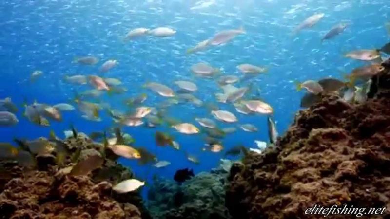 Elitefishing.net представляет архипелаг БЭТ 2 Коста Рика