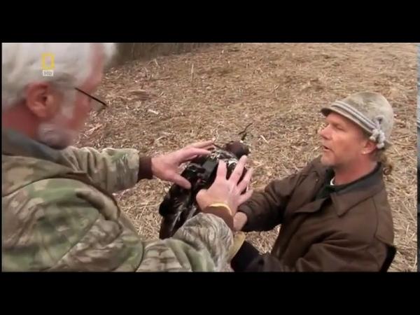 Хищные птицы Сокол Сапсан Документальный фильм National Geographic
