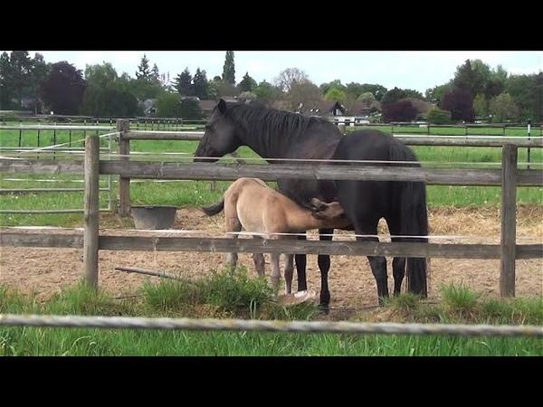 Лошади, Германия, весна пришла! Животные, животный мир, Аnimals,Tiere